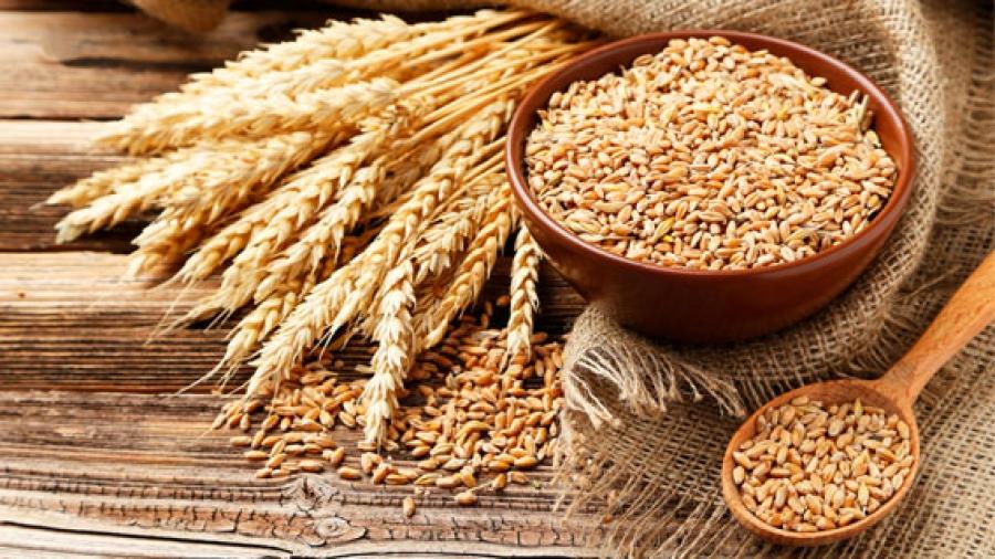 Entrada AA. El Germen de trigo