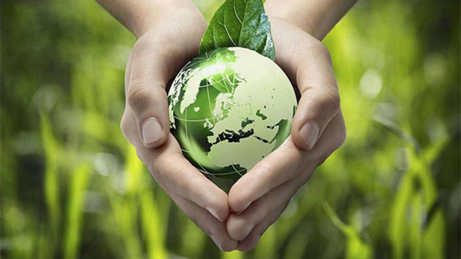 Entrada semana 46. La Miel Ecológica y otros productos Ecológicos 1