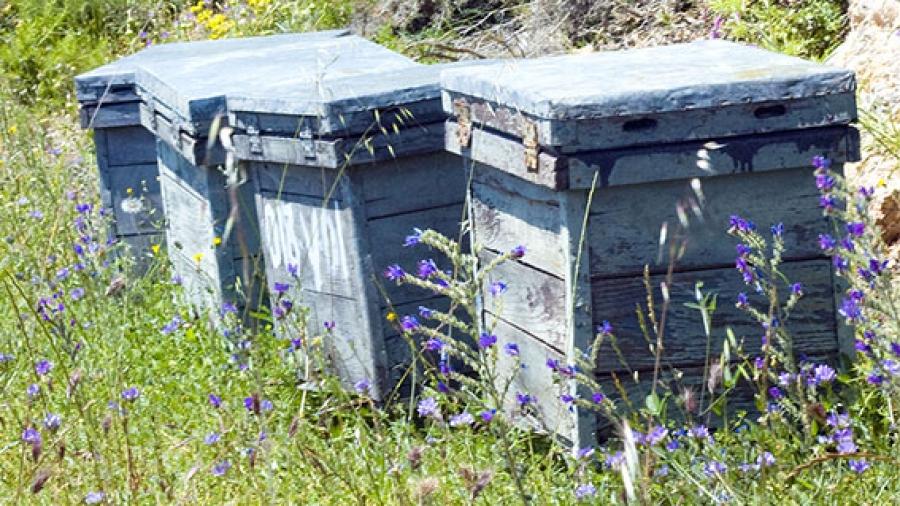 Entrada semana 47. Material apícola básico para iniciarte en la apicultura 1
