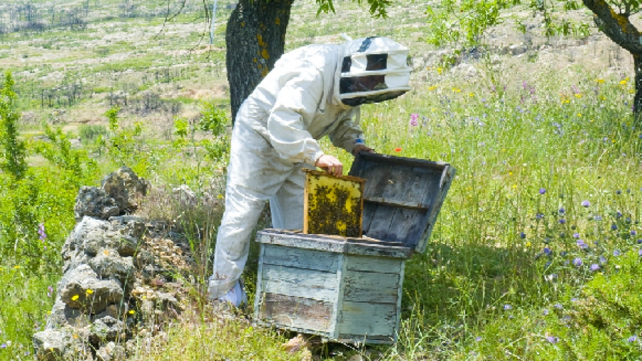 Entrada semana 8. Que es la apicultura 1
